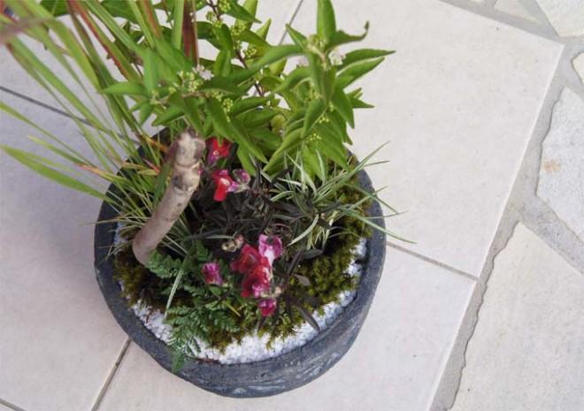 流木を使用した和モダンの寄せ植え