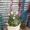 お花全体イメージ